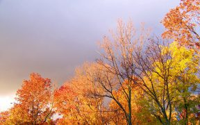 Stormy autumn day
